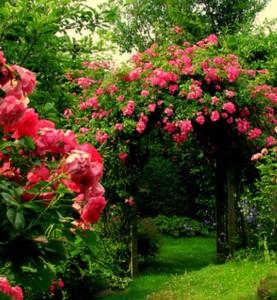 Потребность роз в различных элементах питания